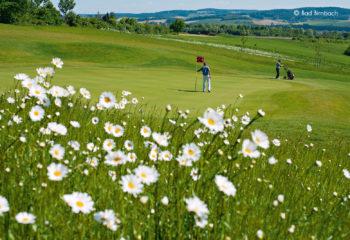 Bella Vista Golfpark - Spieler Blumenwiese